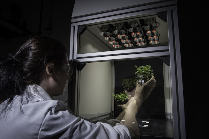 Scientist working with a plant