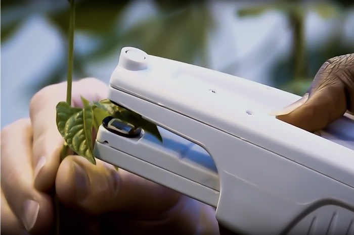 Science instrument clipping over a plant leaf