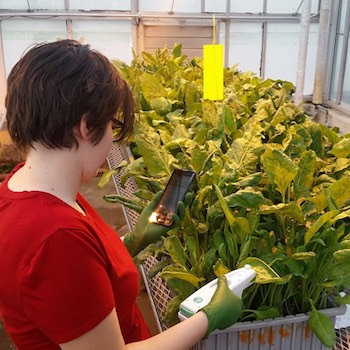 Measuring plants with PhotosynQ