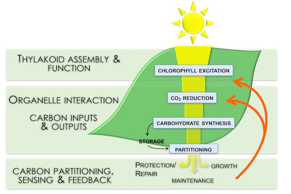 Holistic view of photosynthesis