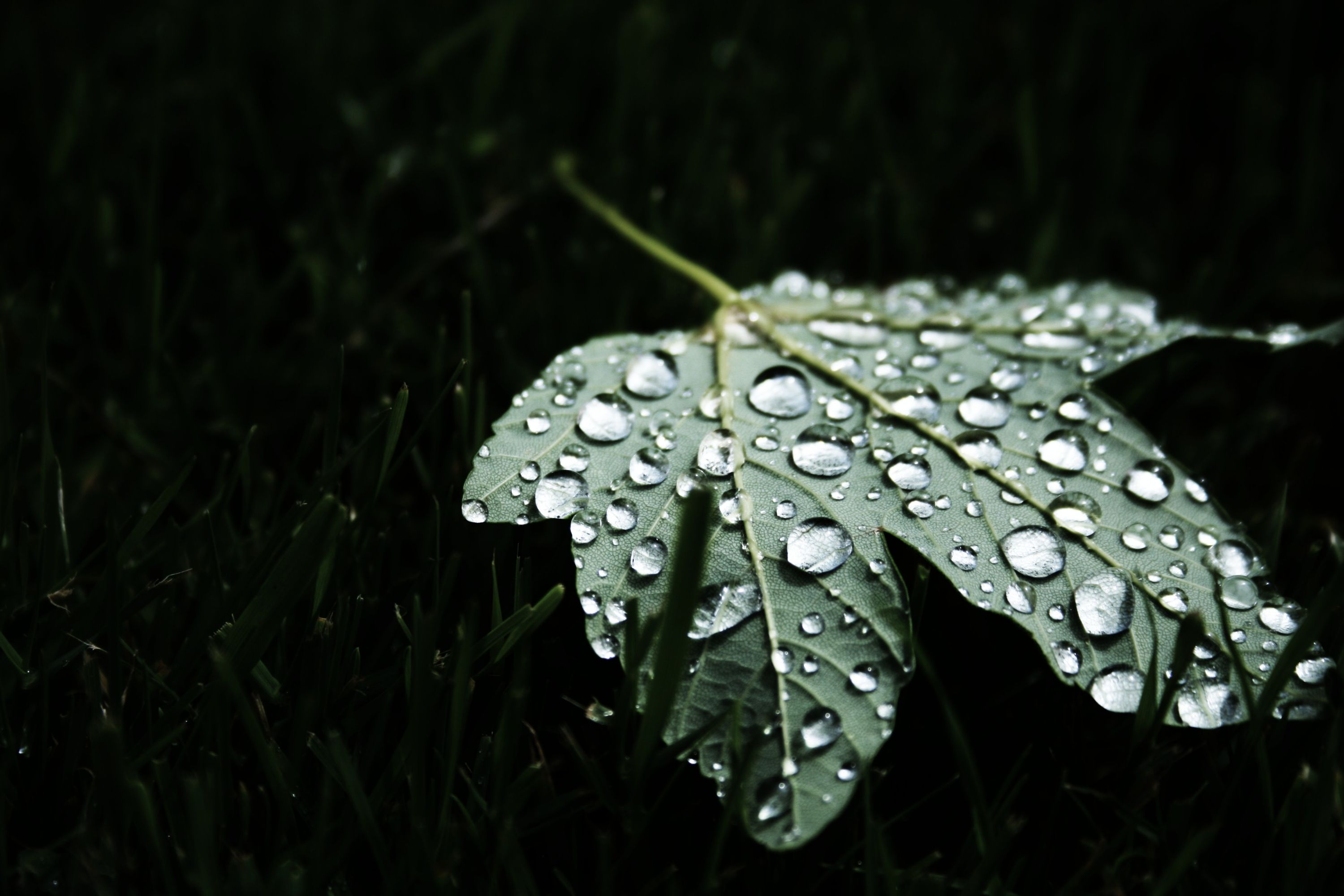 Leaf in the dark with water droplets