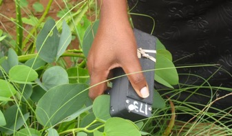 Image of someone using the MultispeQ to take a plant measurement