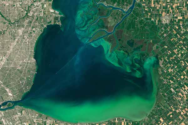 Lake Erie cyanobacteria bloom, seen from space