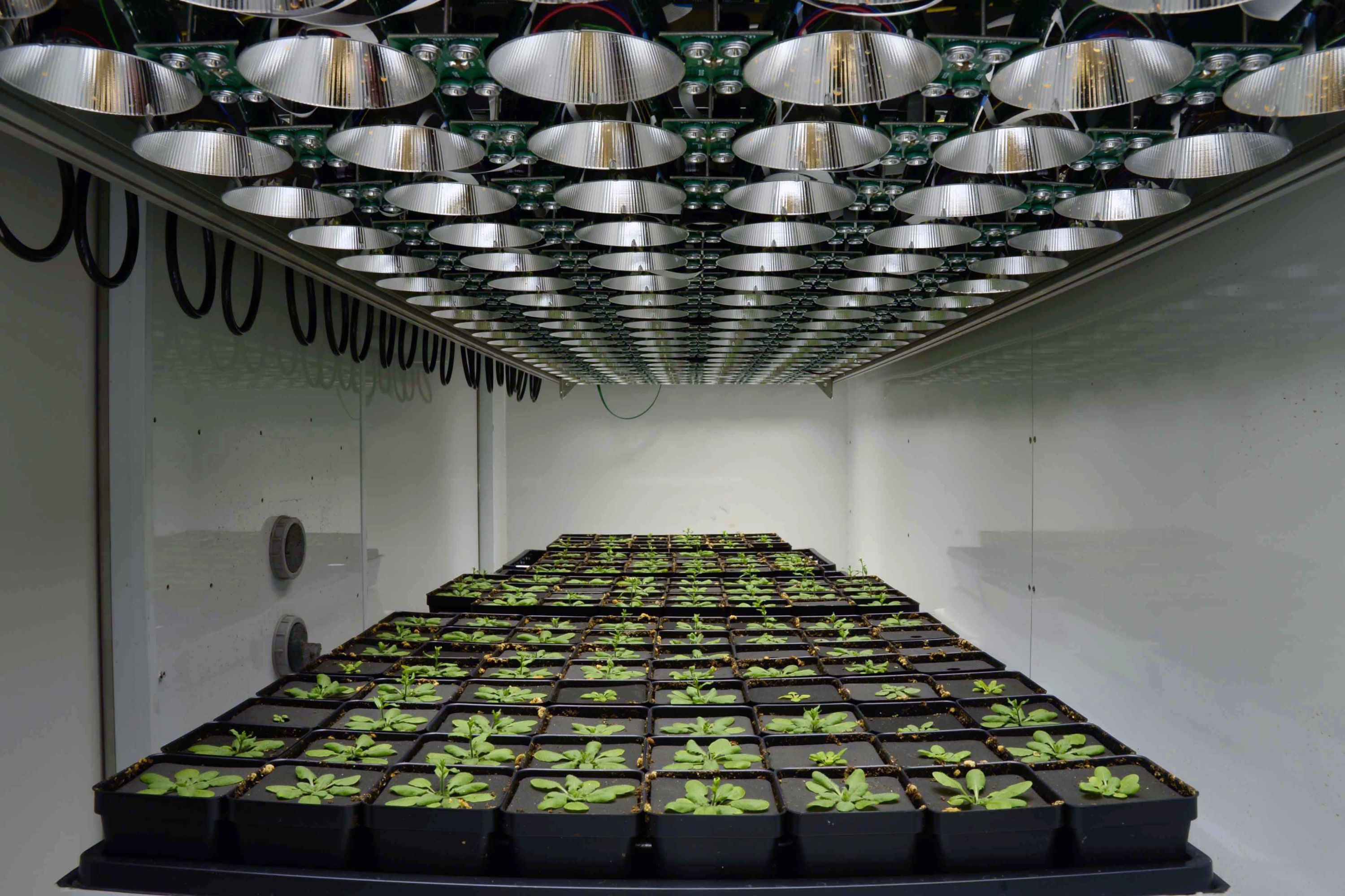 Image of the DEPI chamber, with lights and plants ready to be tested.