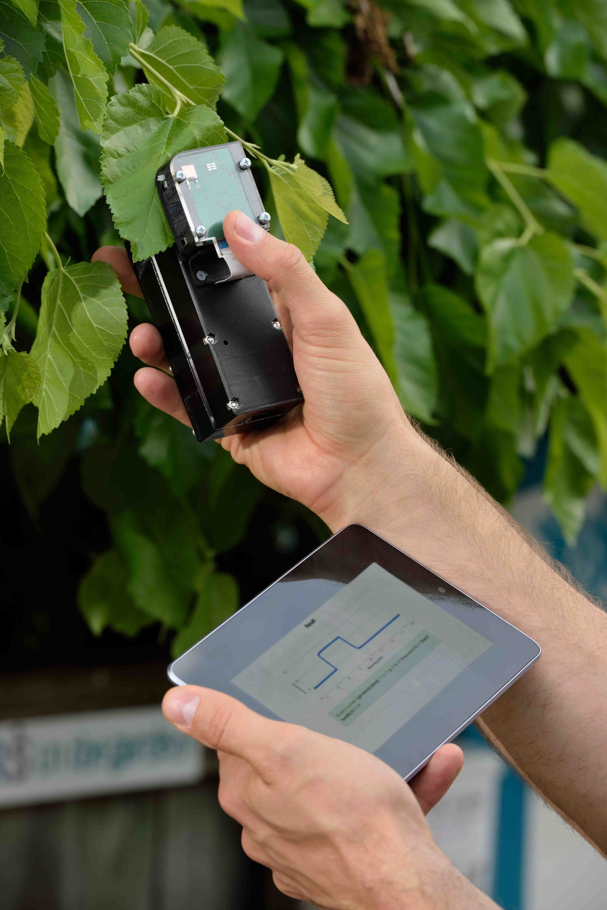 An image that shows a device clipping to a plant and immediately uploading data to a mobile app.