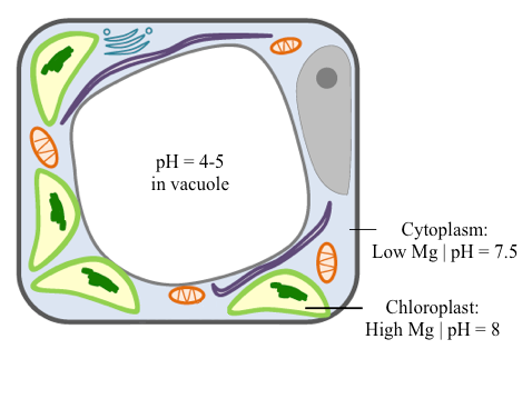 Figure of a normal cell